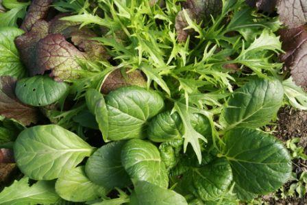 Salad greens at Spirit Matters Centre